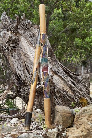 Two didgeridoos, indigenous Australian musical wind instruments, lean against fallen tree stump.  Location is Kangaroo Island, Hanson Bay Koala Sanctuary, in South Australia.