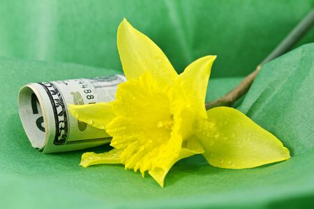 spiritualism: Spring daffodil placed next to American currency on green tissue paper; iconic blossom and colors of spring reflect seasonal finance or business;