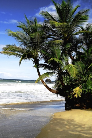 Trinidad beach on north shore, remote and quiet, Caribbean island sunny and sandy with green palms and blue skies   Stock Photo - 13433886