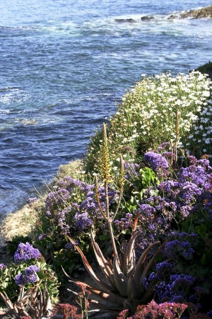 View of coastline near La Jolla, California, in spring shows Pacific Ocean and wildflowers. Stock Photo - 13636820