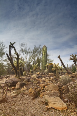 American Southwest desert scene with red rocks in foreground, young saguaro and cactus backed by rippling clouds and blue sky. Copy space on top and bottom left. photo