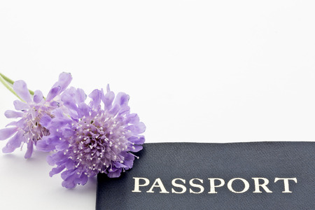 Blue and purple hues of delicate scabiosa butterfly blue flowers accent a passport placed on white background with copy space at top and right.
