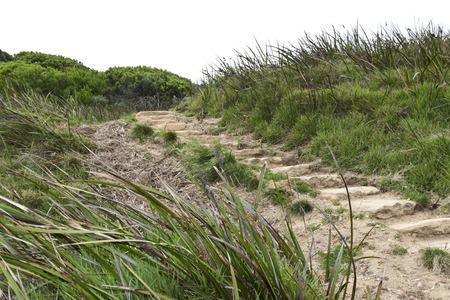 walking trail: Passi per la famosa Great Ocean Walk, un sentiero che ombre la Great Ocean Road a Victoria, in Australia. La passeggiata attraversa luoghi simbolo della citt� come i Dodici Apostoli, Cape Otway, e Otway National Park.