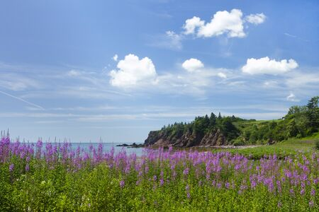 Flower, rock, and sea coastline of New Brunswick province in Canada on a sunny summer day.