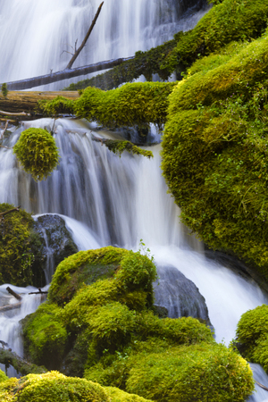 byway: Natural, fallen log across the silky waterfall and mossy rocks of Clearwater Falls in Oregon on Umpqua Scenic Byway.  Short walk leads to lovely, secluded waterfall of tranquility and beauty. Stock Photo