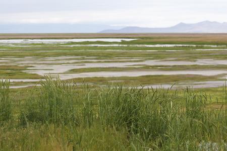 파 밍 턴 물새 관리 지역, 그레이트 솔트 레이크 서반구 도요 물떼새 준비 제도의 일부 습지 뷰. 이 지역은 이주 휴식, 수유 및 둥지 서식지뿐만 아니라