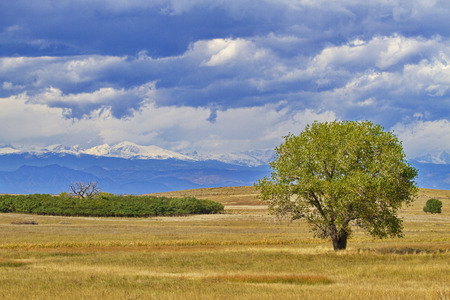 Opposing metaphors visible in rich green tree in foreground contrasted with stark leaffless tree in distance. Location is near Denver, Colorado.