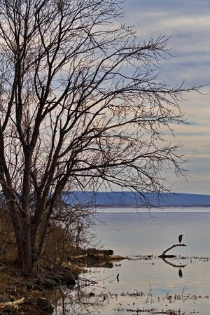 Natural peacefulness of Sequoyah National Wildlife Refuge in Oklahoma reflected in bare winter tree and lone egret