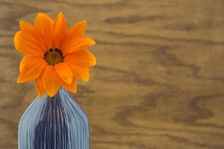 African daisy in vase is single blossom focus with natural wood grain background behind Banque d'images