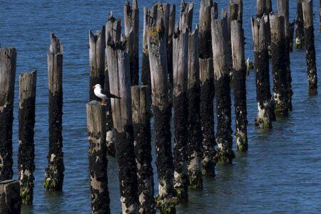Remnants of Old Pier in Bridport, Tasmania, Australia, in October of 2018