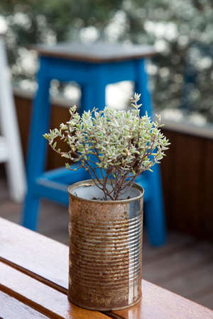 Contrast of rusty tin can and fresh young plant highlights casual still life. Background of vertical photograph in bokeh.