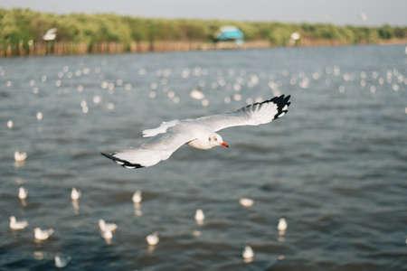 samutprakarn: Seagull in Bangpoo