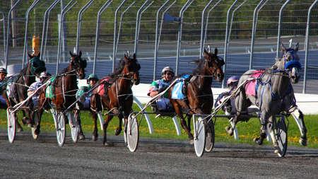 caballos corriendo: Primero en llegar a la meta Editorial