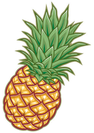fresh ripe pineapple with green leaves Vector