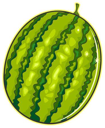vector illustration green fresh watermelon Vector