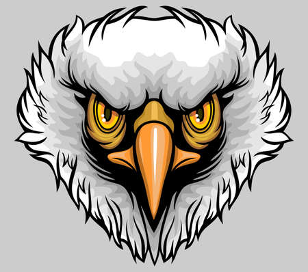 headed: white headed eagle with yellow sharp eyes Illustration