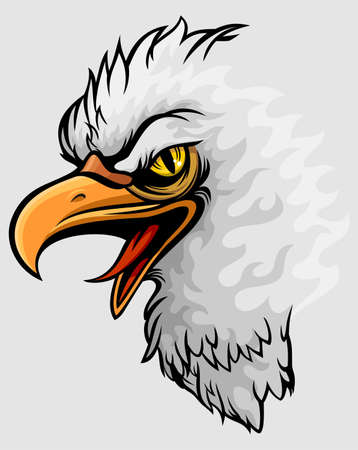 headed: white headed eagle with yellow sharp eye
