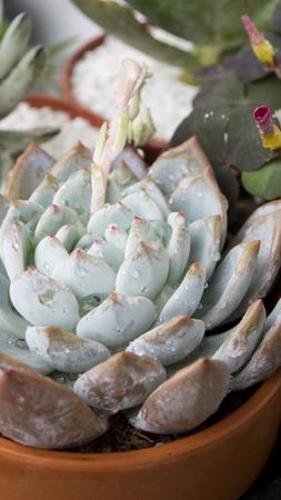 hobbies: Succulents succulent plants hobbies gardening