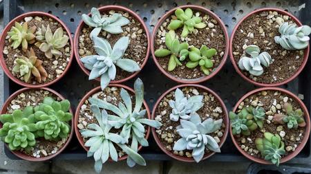 Succulents succulent plants hobbies gardening