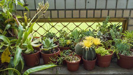 Cactus succulents droughttolerant plants carnivorous plants terrace garden photo
