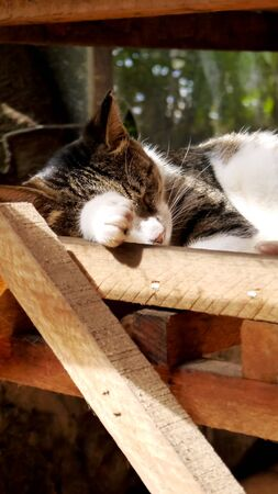 sleep well: stray cats sleep well Sunshine afternoon cute comfortable at ease