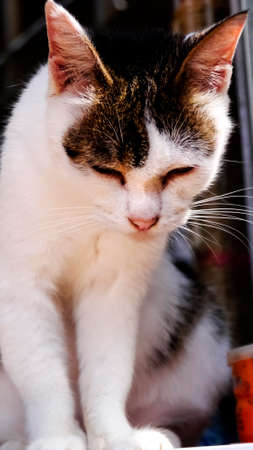 comfortable: stray cats Sunshine afternoon cute comfortable at ease