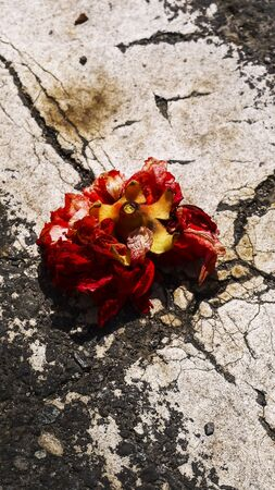 wither: Pomegranate Red flower wither Cracking
