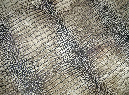 weiß Kroko-Textur, abstrakte Gefahr Nahaufnahme