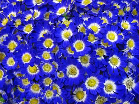 blue flowers background, love diversity concept photo