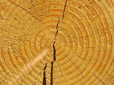 boom kappen: gele kleur houtstructuur close nieuwe pijnboom snijden, achtergrond, concept