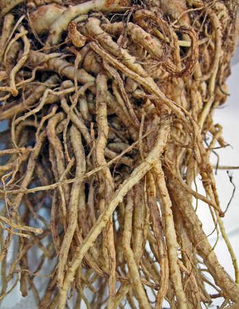 natural root diversity, tuber details, nature