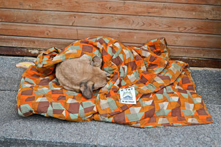 coverlet: KIEV - DEC 05  Dog sleeps under coverlet on Euro maidan meeting in Kiev on December 05, 2013  Meeting devoted to declining of Ukraine for integration to the European Union  Editorial