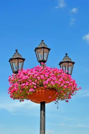 retro street lamp pylon with flowerpot with petunia pink flowers on blue sky with white clouds, summer season nature diversity