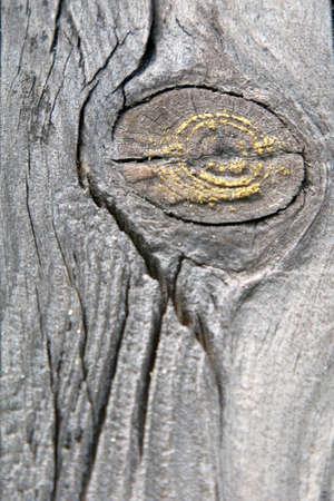 knothole: knothole on a wood plank Stock Photo