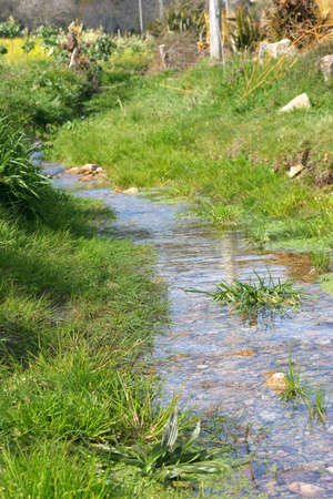 green vegetation: small creek with green vegetation Stock Photo
