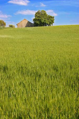 grass hill photo