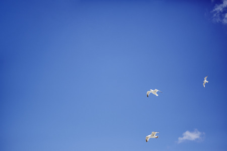 blue sky and flying seagulls