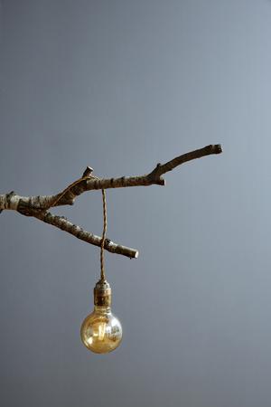 bulb on birch branch modern lamp design Stock Photo