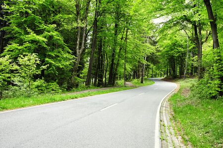 road going uphill green woods in springtime Stock Photo