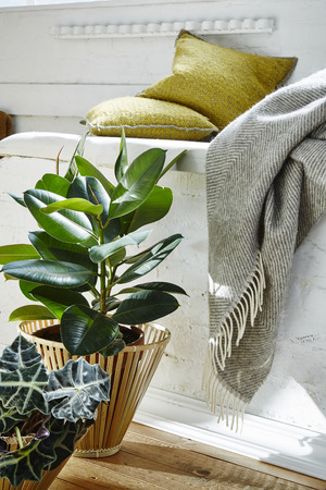 loft still life plants and blanket in vivid  morning light