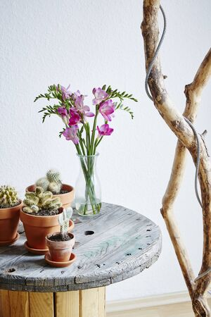 urban upcycling coffee table with cacti and flowers Stock Photo