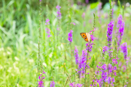 sunshine insect: Landscape Stock Photo