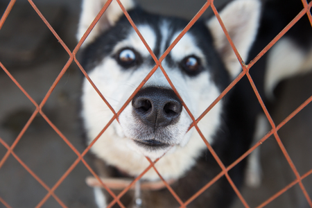 exaggerated: Sled dogs