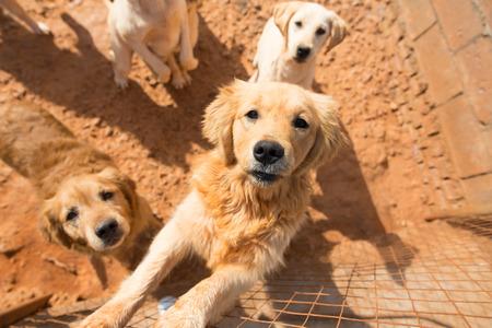 bevy: Dog