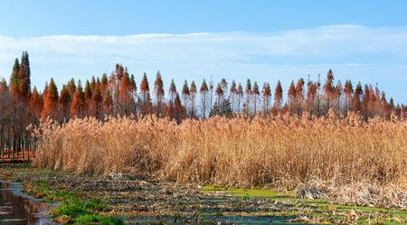 wetland: Wetland in Kunming Stock Photo