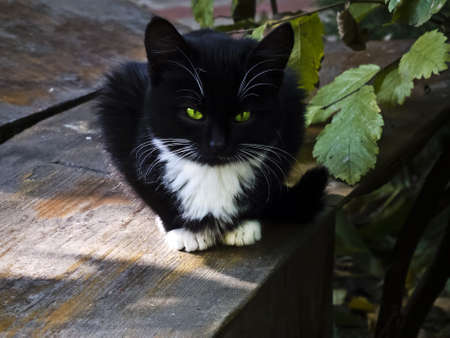 black kitten with a predatory gaze on the bench Stock Photo - 12031021