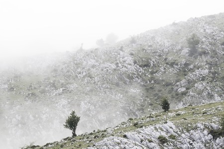 landscape of high mountain in Asturias, north of Spain. The view is in favor partially hidden of the fog. The hills mark a diagonal in the frame and are diluted gradually in the distance because of the fog In the first hill two trees outside the fog are a Standard-Bild
