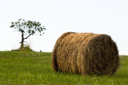 bale of hay for the head of cattle in a green meadow. The bottom and the left of it sees a small tree