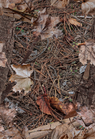 A realistic woodland camouflage pattern with leaves Stock Photo