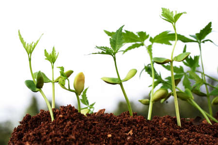 neem: Evaluation Process-Stages of the plant development
